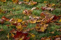 说谎在w的绿草的黄色,金黄,棕色秋叶 免版税库存图片