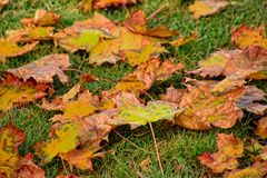 说谎在w的绿草的黄色,金黄,棕色秋叶 库存照片