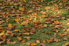 说谎在w的绿草的黄色,金黄,棕色秋叶 免版税图库摄影