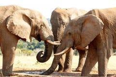请大象先生-非洲人布什 免版税库存图片