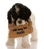 请求小狗 免版税库存照片