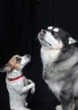 请求狗 免版税库存照片