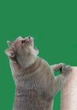 请求食物保险开关的 免版税库存图片