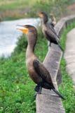 请求鸟沼泽地佛罗里达食物 免版税库存图片