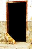 诸暨古老车道在中国 库存照片
