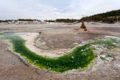 诺哩斯喷泉水池黄石,怀俄明,美国 免版税库存图片