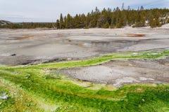 诺哩斯喷泉水池黄石,怀俄明,美国 免版税库存照片