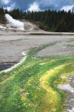 诺哩斯喷泉水池黄石NP 免版税库存图片