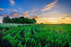 诺曼底玉米领域 免版税库存照片