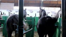 诺维萨德,塞尔维亚, 20 05 2018公平,许多五颜六色的马 股票视频