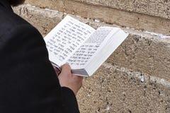 读在哭墙的摩西五经 免版税库存照片