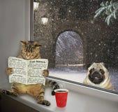 读报纸的猫在基石3 免版税图库摄影