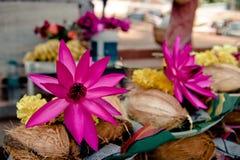 课程: 桃红色莲花,黄色花 库存图片