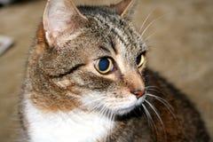 谁那只猫 免版税图库摄影