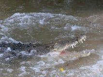 调查一条鳄鱼的开放嘴在水中 图库摄影