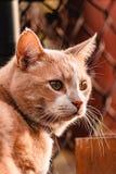 调查日落的猫 免版税库存照片