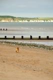 调查海滩的小男孩 免版税库存图片