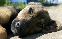 调查照相机的可爱的小狗 免版税库存图片