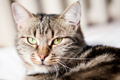 调查照相机的猫 免版税库存图片