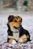 调查距离的一条饥饿的狗 库存图片