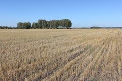 调遣与在秋天的一棵被割的草 免版税图库摄影