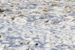 调遣与波浪起伏的雪盖和草一束 免版税库存照片