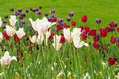 调遣与白色,紫色和红色花-春天 免版税库存图片