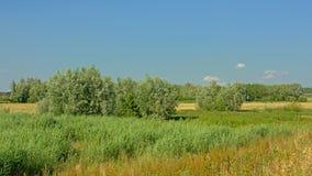 调遣与芦苇和树在Kalkense Meersen自然reerve,富兰德,比利时 免版税库存照片
