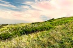 调遣与草和开花的花春天 花田 一些反弹严格晴朗那里不是的蓝色云彩日由于域重点充分的绿色横向小的移动工厂显示天空是麦子白色风 免版税图库摄影