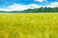 调遣与麦子和蓝色多云天空的成熟耳朵 库存图片