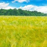 调遣与麦子和蓝色多云天空的成熟耳朵 免版税图库摄影