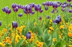 调遣与紫色和黄色花-春天 库存照片