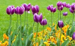 调遣与紫色和黄色花-春天 免版税库存照片