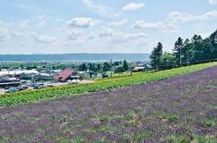 调遣北海道日本淡紫色 库存图片