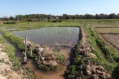 调遣北部米泰国 库存照片