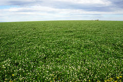 调遣反对天空、农业和农场土地有天空和云彩的在维多利亚,澳大利亚 图库摄影