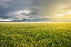 调遣在日落用生长麦子和在远的距离的山景 免版税库存图片