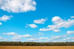 调遣在森林和天空背景的燕麦  免版税库存照片
