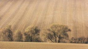 调遣条纹和线,自然农业背景 库存照片