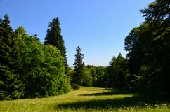 调遣森林小山路视图 免版税库存照片