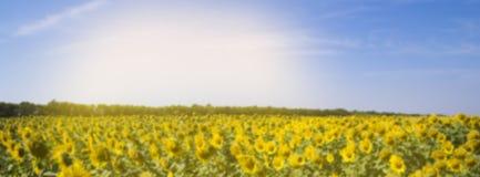 调遣用向日葵和蓝天被弄脏的横幅 免版税图库摄影