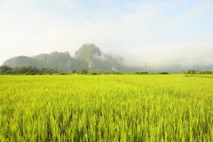 调遣米 免版税库存照片