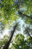调遣结构树 结构树在森林里 免版税库存照片