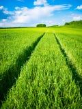 调遣绿色麦子 在一块绿色麦田的路 农业运输踪影在草的在一个晴天 免版税图库摄影