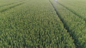 调遣绿色麦子 股票录像