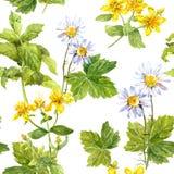 调遣花,草甸春黄菊,金丝桃属植物,薄菏 无缝的模式 水彩 库存图片