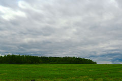 调遣草森林在背景和暴风云中 库存图片