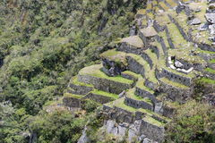调遣露台 Machu Picchu 秘鲁 免版税图库摄影