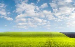 调遣麦子冬天 库存图片