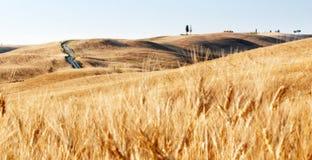 调遣麦子 库存照片